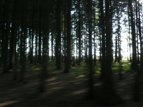 uzkokolejka forest1