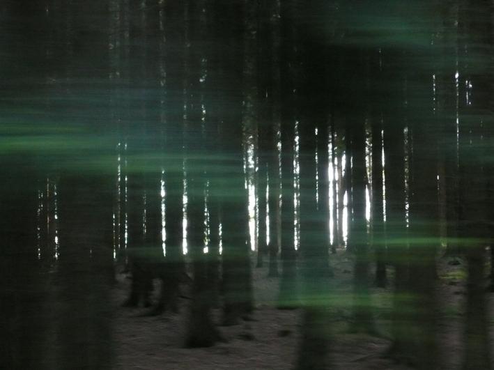 uzkokolejka forest2