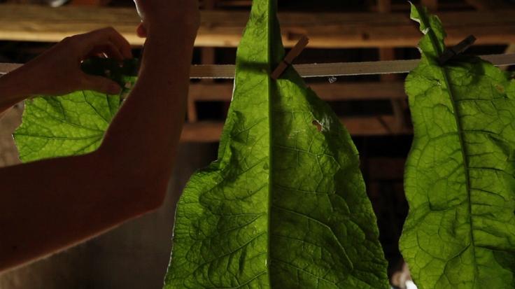 leaf hanging