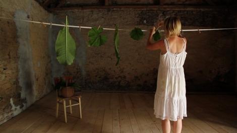 leaf hanging2