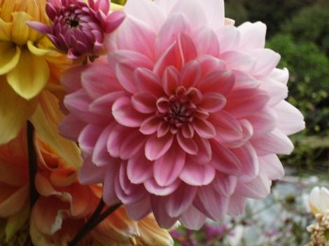 jb-pink-flower